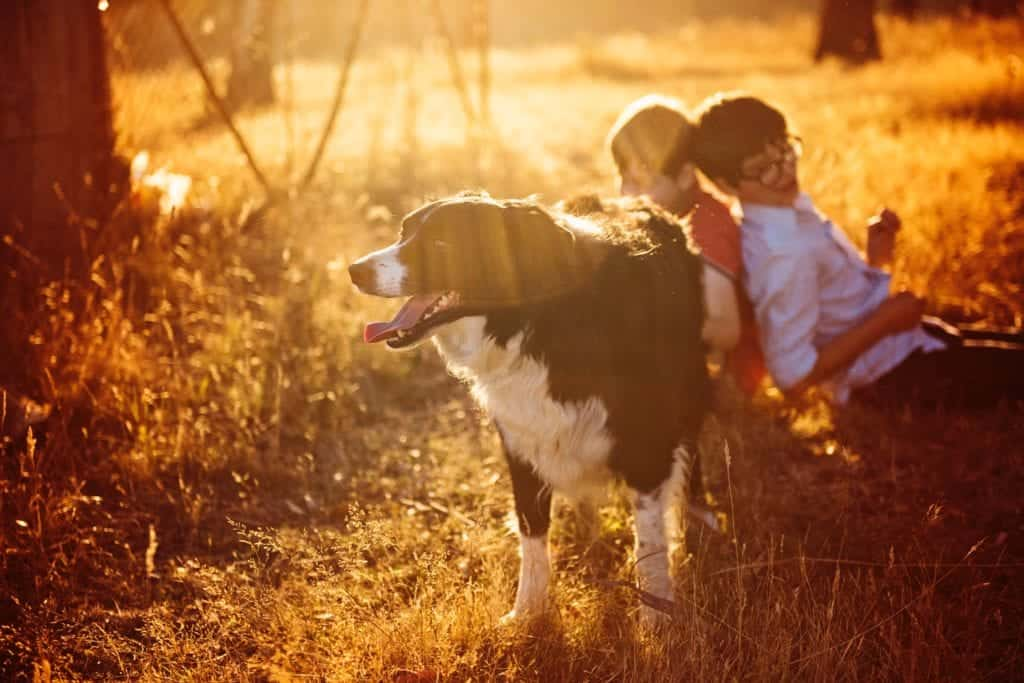 Babies And Dogs: Raising Kids With Pets