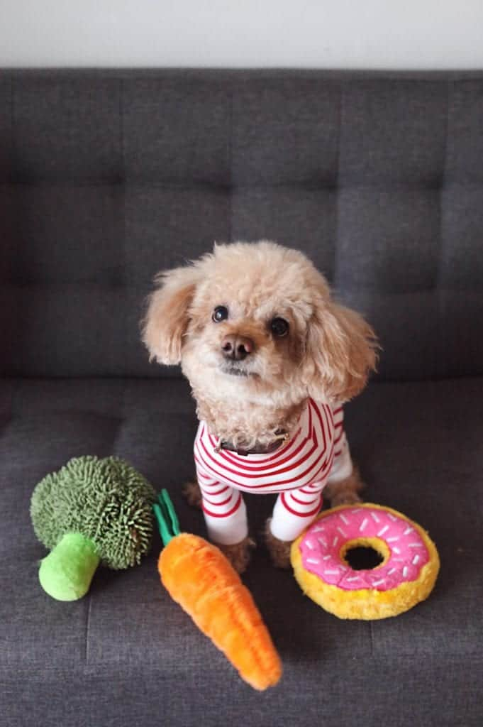 Dog Diet: A Balanced And Nutritious Diet For Your Pet