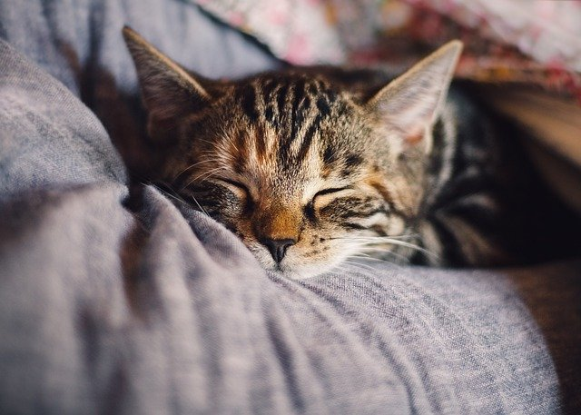 A close up of a cat lying on a bed