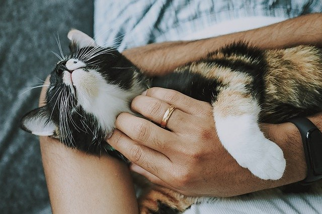 A person holding a cat